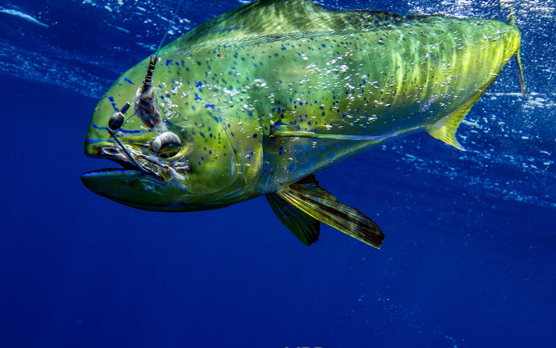 Key west fishing charters key west fishing charters for Best fishing charters in key west