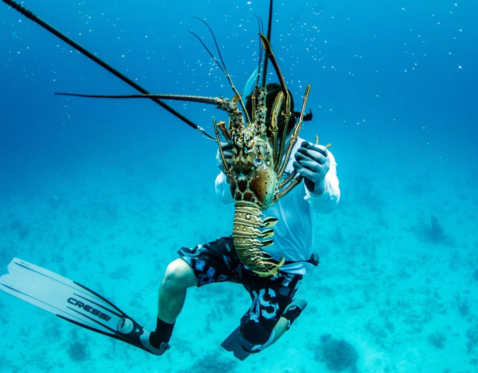 Lobster Diving With Far Out | Key West Fishing Charters | Far Out Fishing