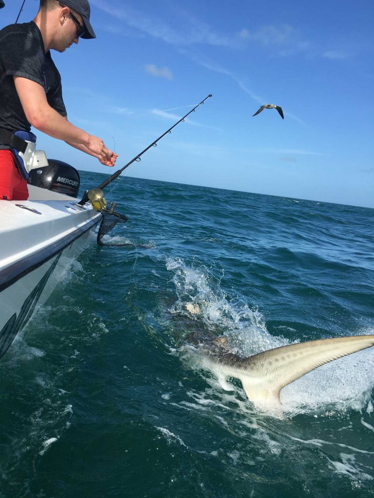 Shark fishing in key west fl key west fishing charters for Key west fishing charters